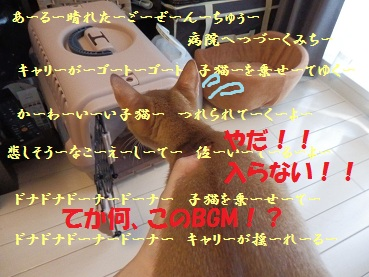 P8090379_2.jpg