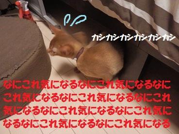 P8110469.jpg