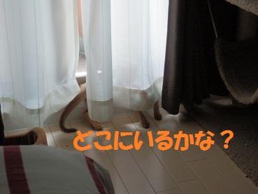 P8120487.jpg
