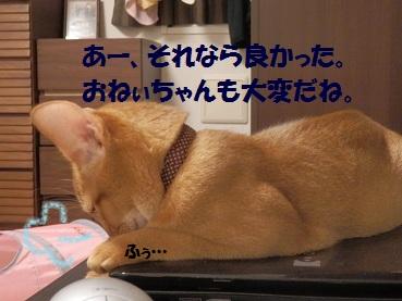 P8140544.jpg
