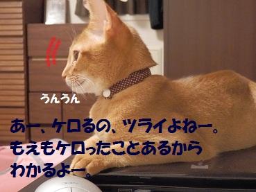 P8140545.jpg