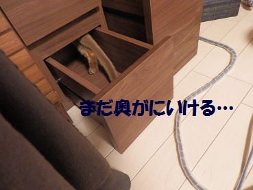 P8150574.jpg