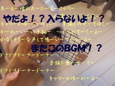 P8250768.jpg