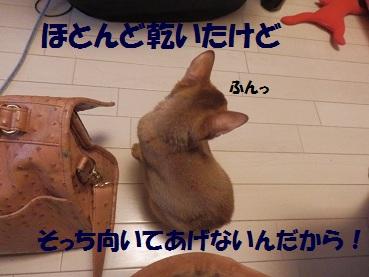 P8260796.jpg