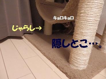 P9030944.jpg