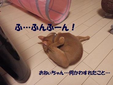 P9040961.jpg