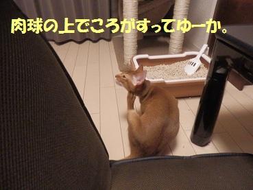 P9071030.jpg