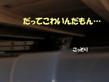 P9091076.jpg
