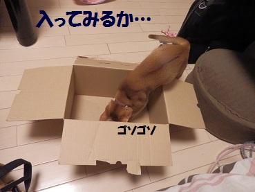 P9101089.jpg
