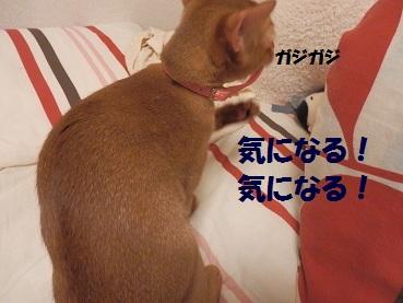 P9111110.jpg
