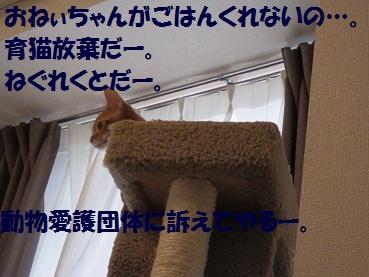 P9151153.jpg