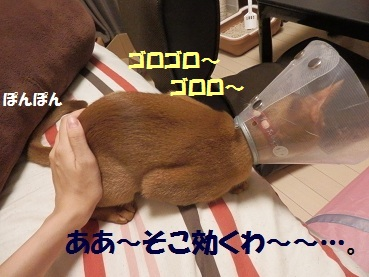 P9201206.jpg