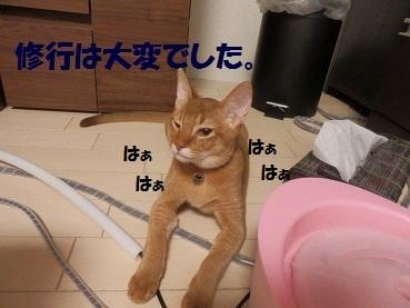 PA101466.jpg