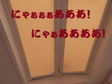 PA141499.jpg