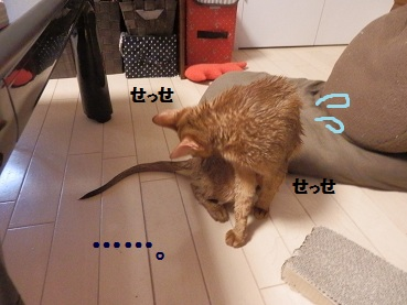 PA141503.jpg