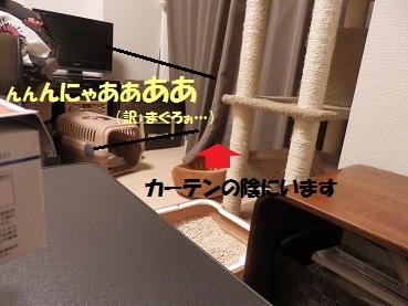 PA291769.jpg
