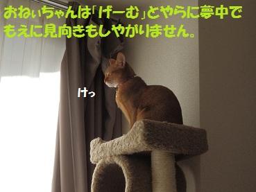 PC022474.jpg