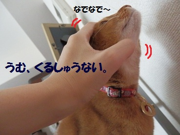 PC022479.jpg