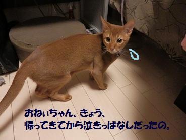 PC032497.jpg