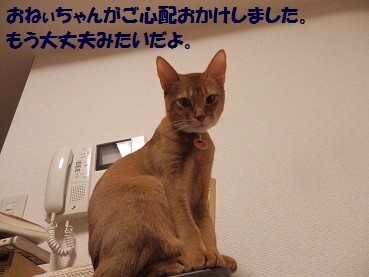 PC032506.jpg