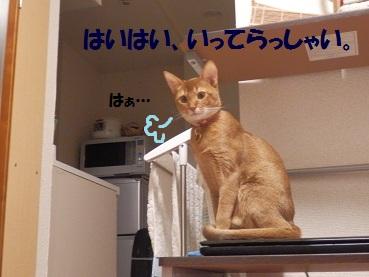 PC092672_20121209204650.jpg