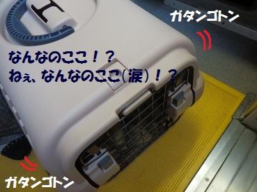 PC162839.jpg