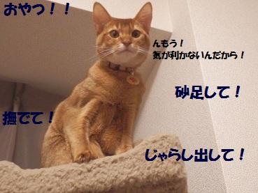 PC212896.jpg
