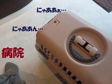 PC232922.jpg