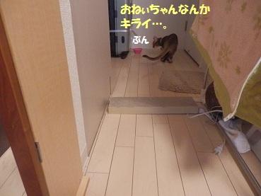 PC232924.jpg
