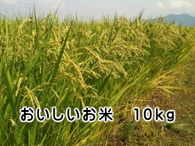 おいしいお米 10kg