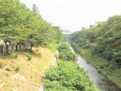 夏の山崎川