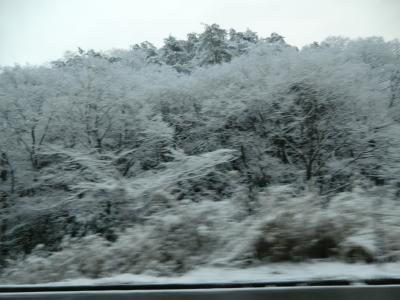 2012-1-24雪景色①