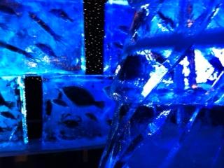 気仙沼市氷の水族館