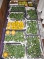 H26.11.13果物収穫@IMG_3687