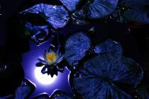 光と愛の感謝日記 地球のカルマ