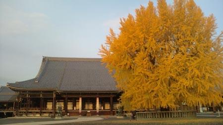 西本願寺のイチョウ2