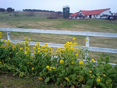 Audax Japan Chiba-マザー牧場
