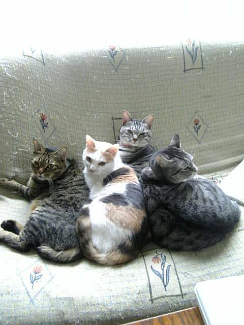 4cat-sofa