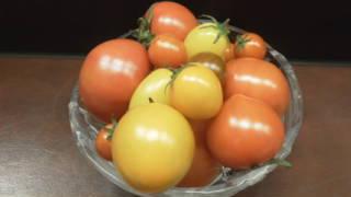 nobuo-tomato
