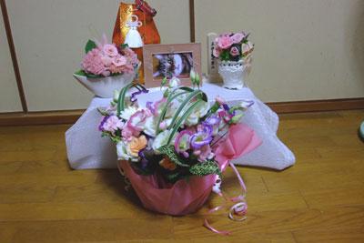 チィへのお花