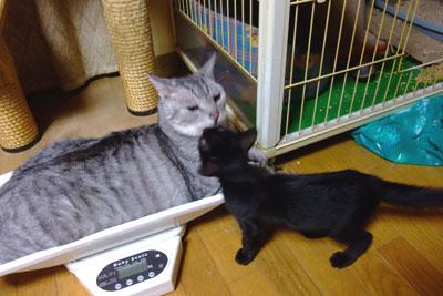 タクと子猫1