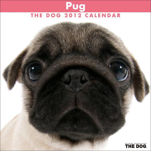 the_dog_2012.jpg