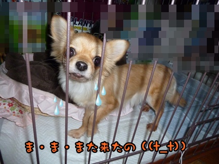 2012-12-17天使001