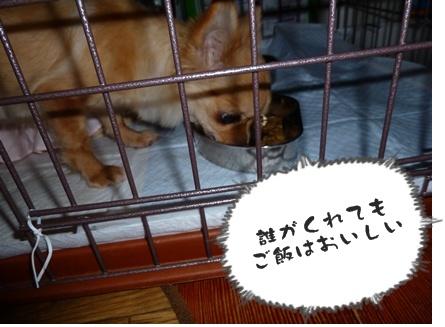 2012-12-17天使013