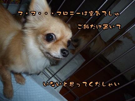 2012-12-17天使004