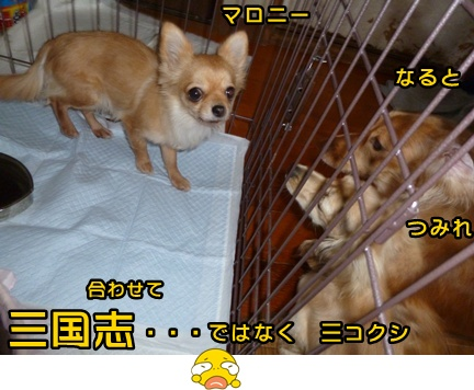 2012-12-17天使003