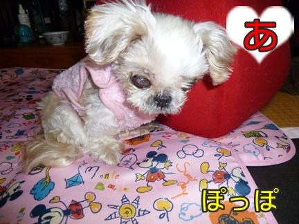 2012-12-1ぽっちゃん024