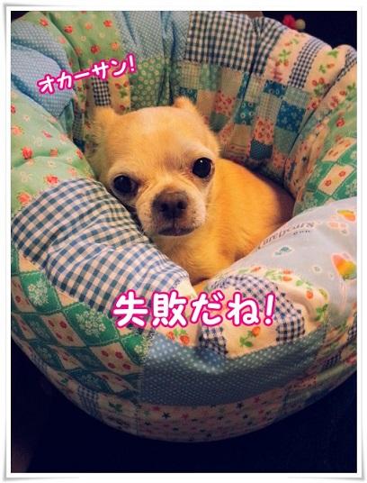 20141109_142736.jpg