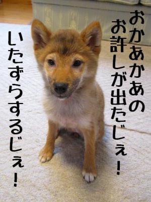 IMG_0265-blog.jpg