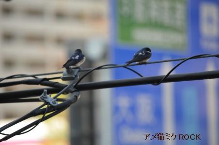 DSC_6482 (ブログ用)